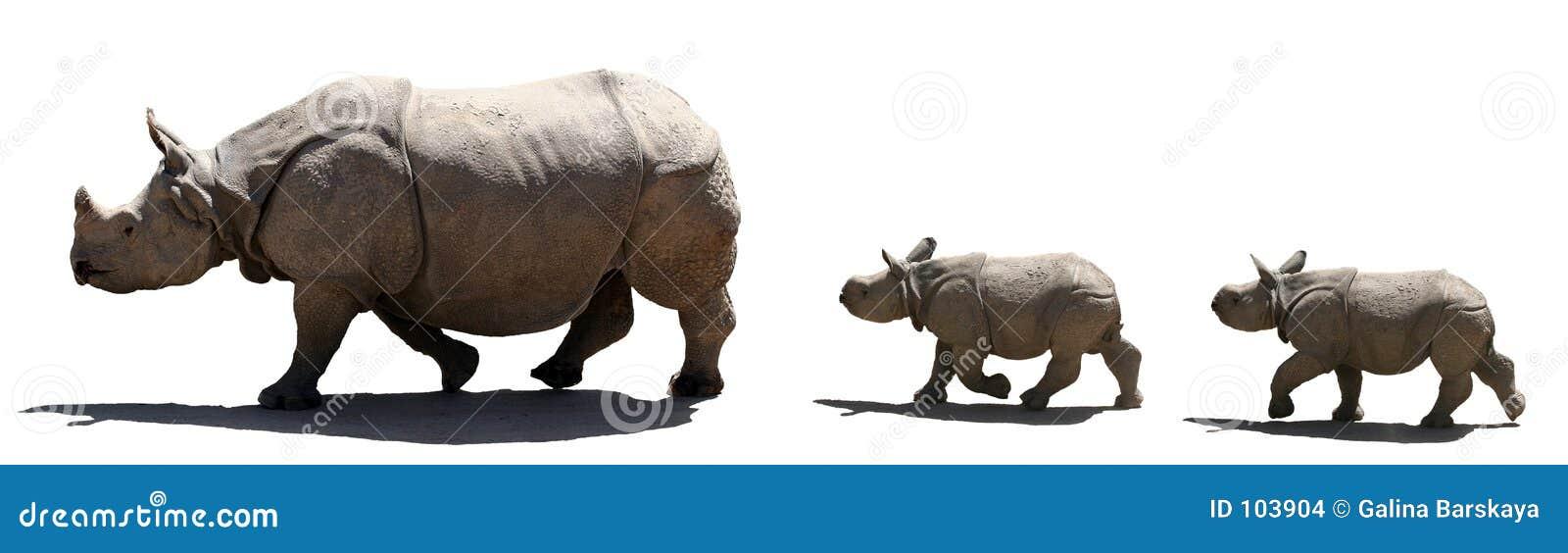 Família do rinoceronte isolada