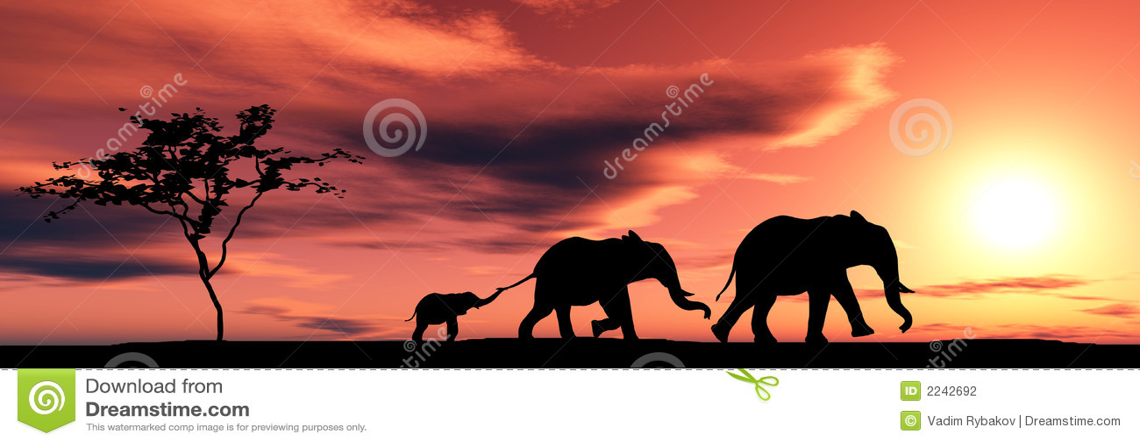 Família dos elefantes
