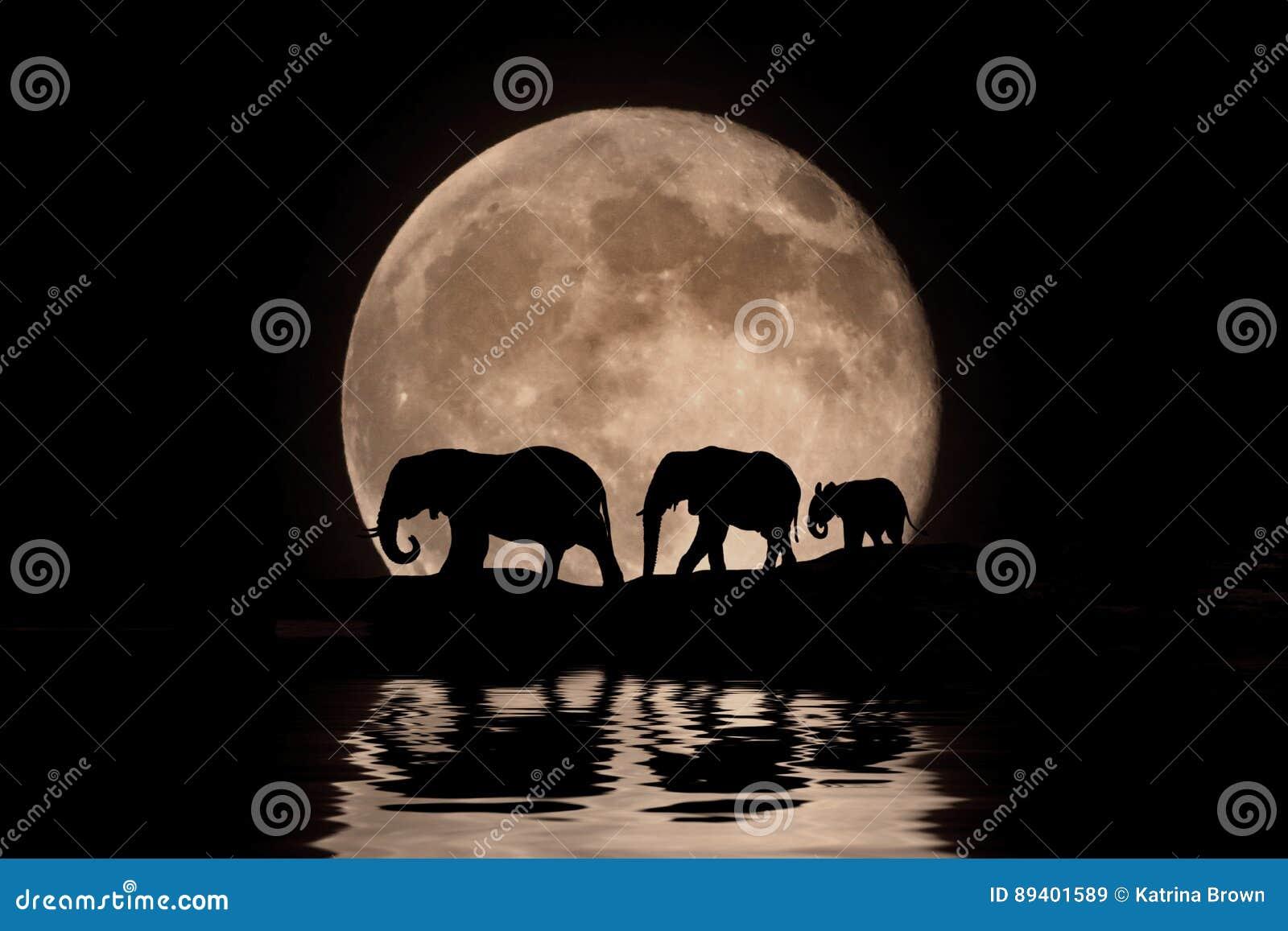 Família dos elefantes na silhueta do luar