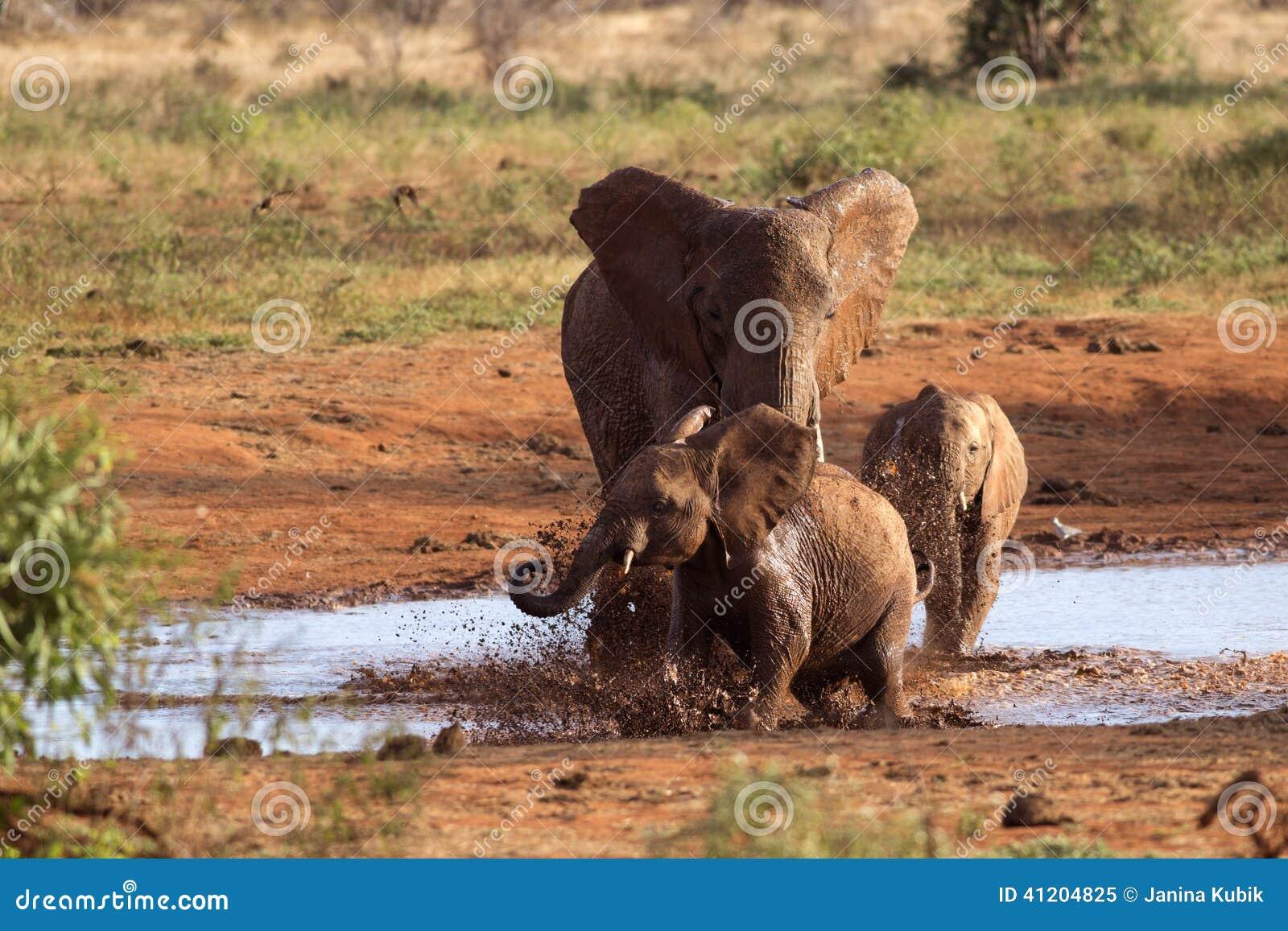 Família dos elefantes que jogam na lama vermelha