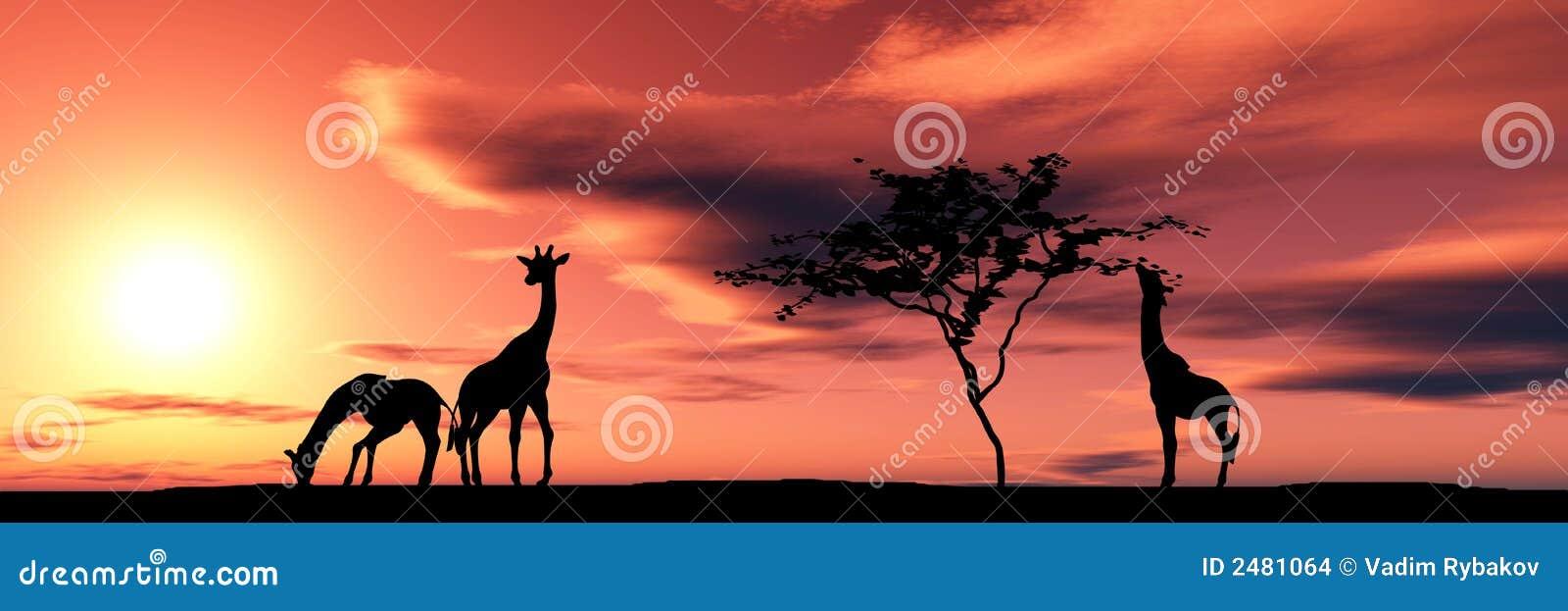 Família dos giraffes