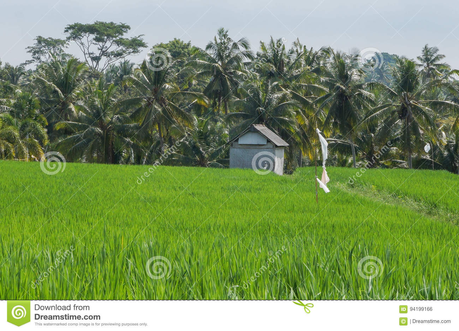 Famer życie w Ubud Bali Indonezja