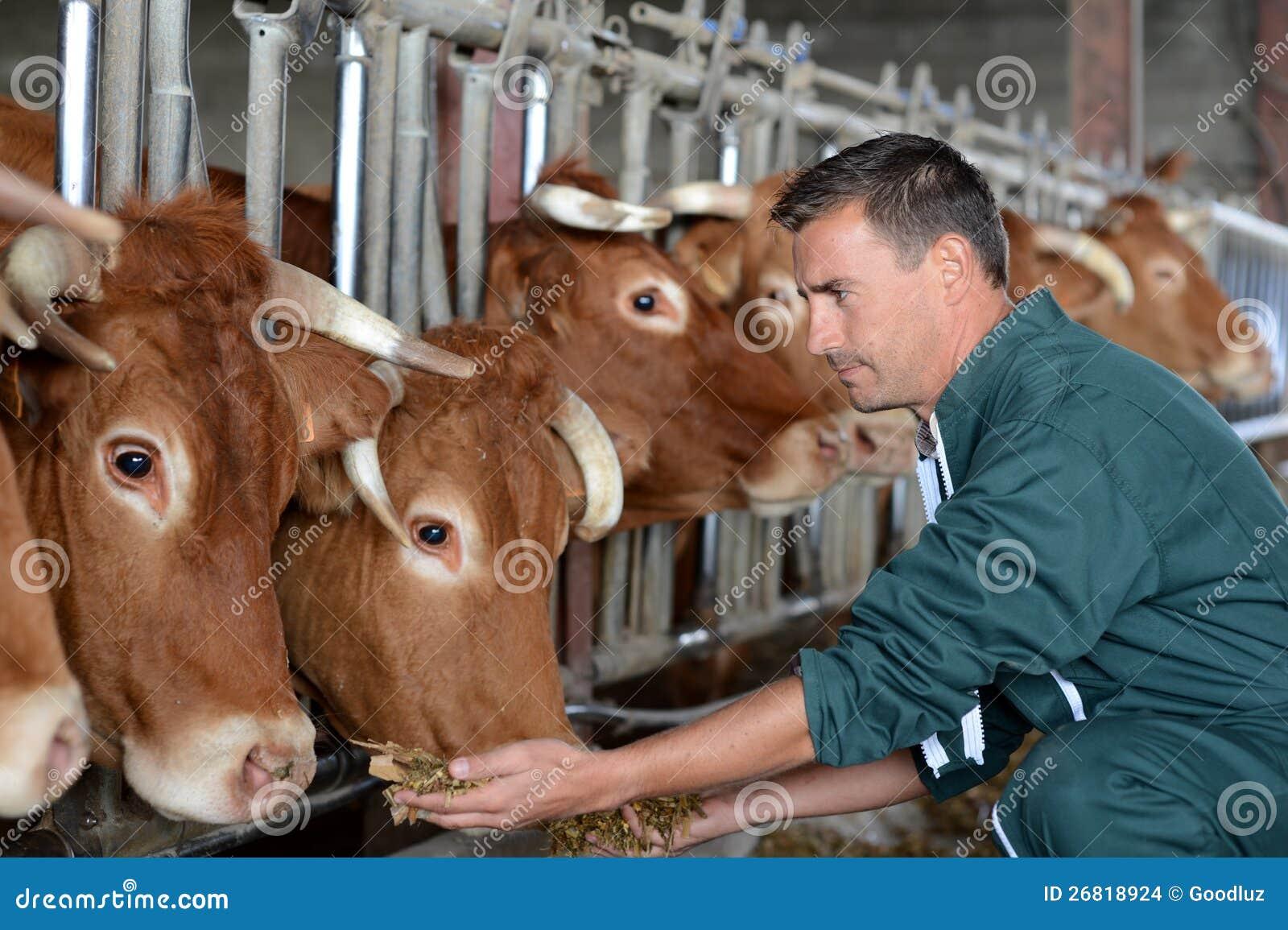Famer e mucche