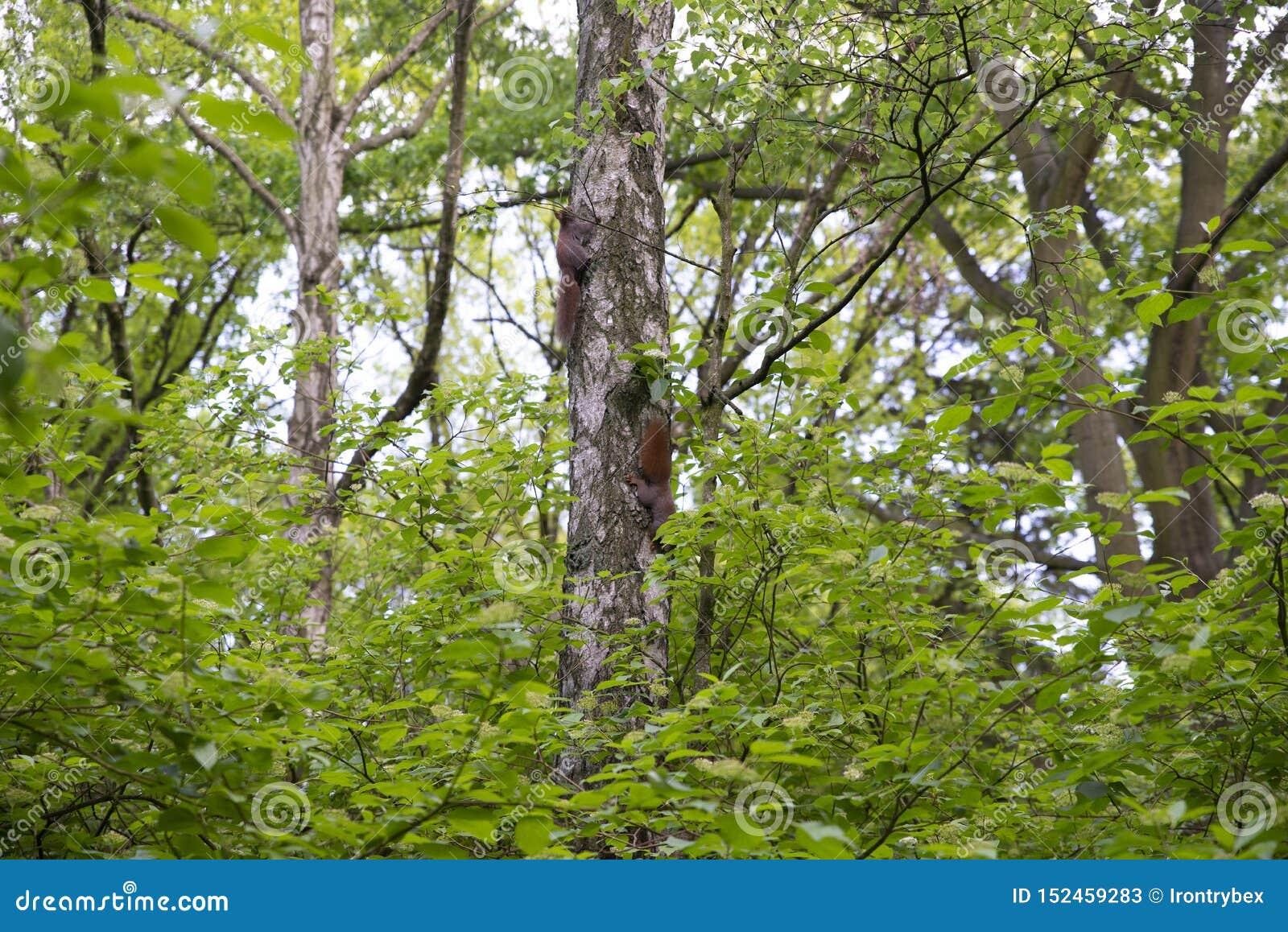 Famiglia degli scoiattoli sull albero