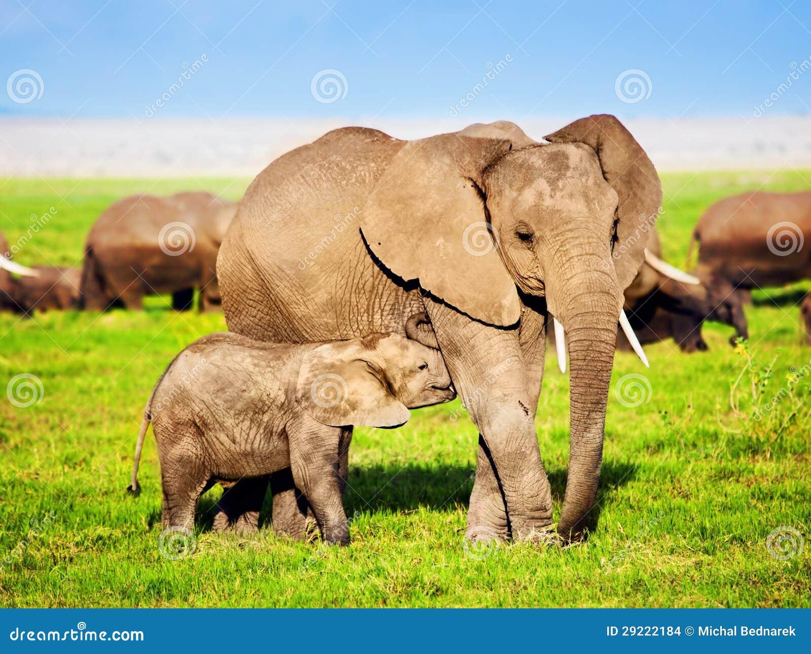 Familia de los elefantes en sabana. Safari en Amboseli, Kenia, África