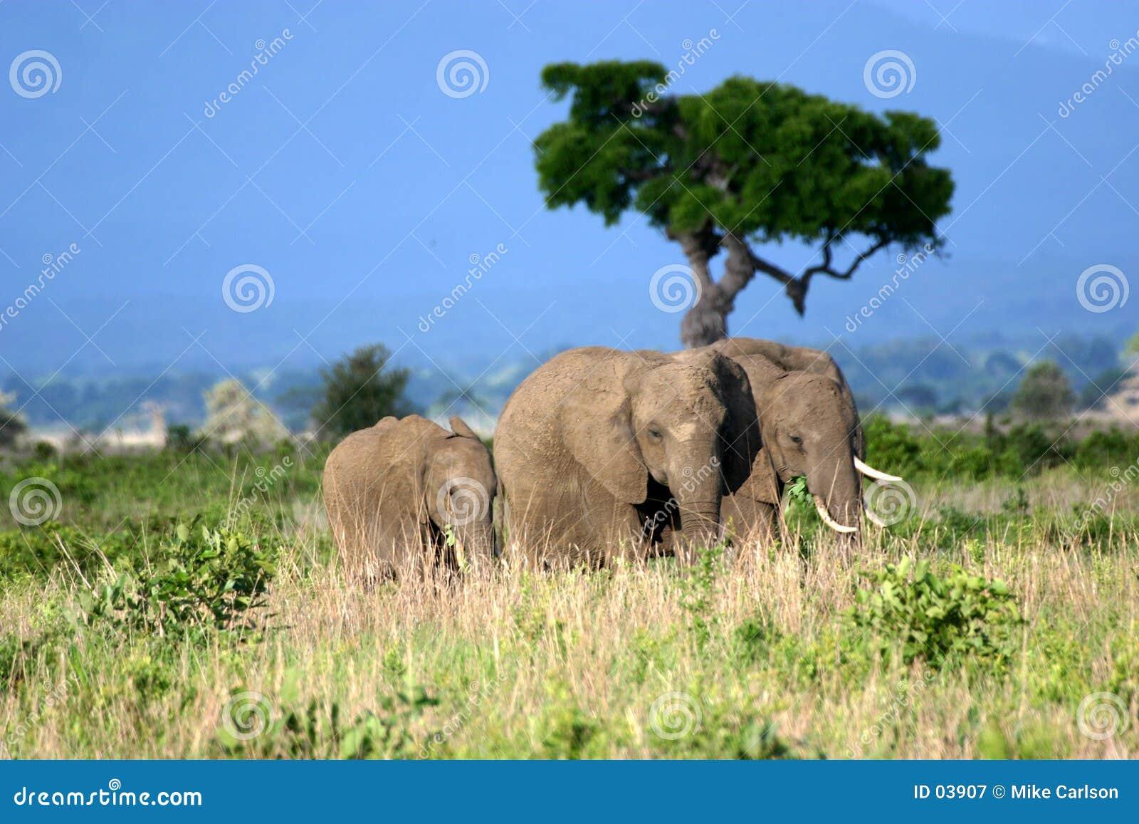 Familia del elefante en los llanos africanos