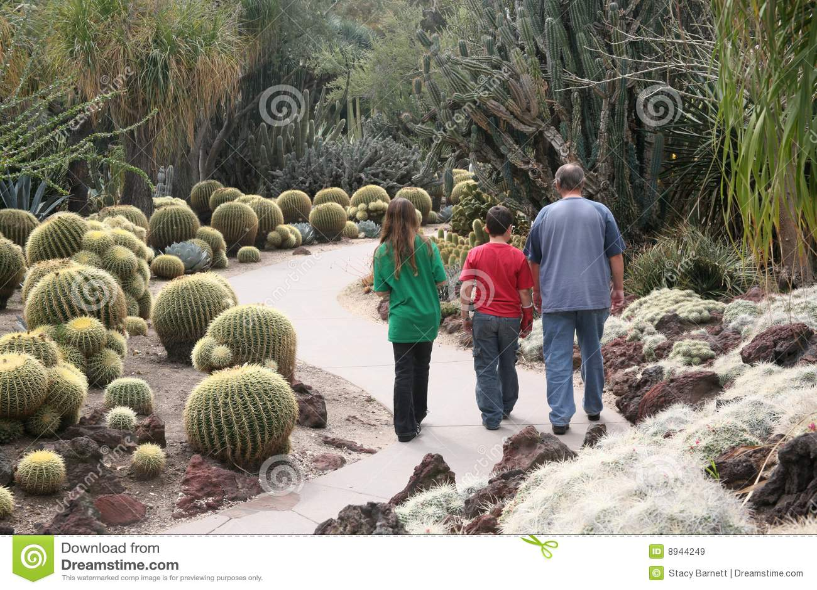 Familia del jardín del cacto