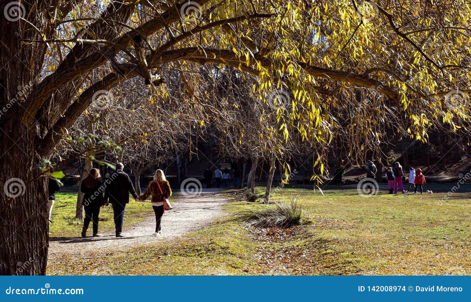 Familie die hun vrije tijd in aardig zonnig weer in een natuurreservaat doorbrengen