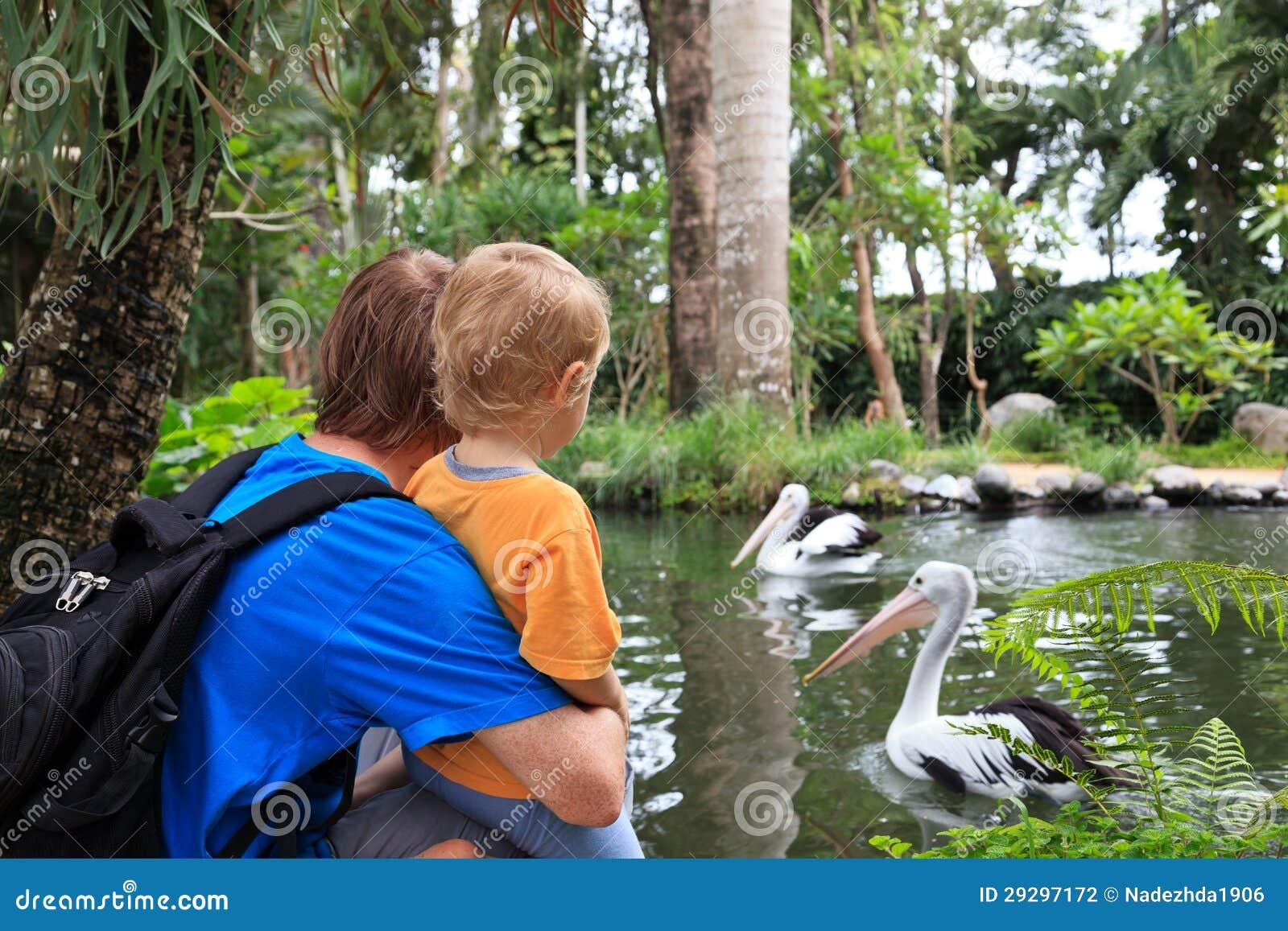 Familie, die Pelikane betrachtet