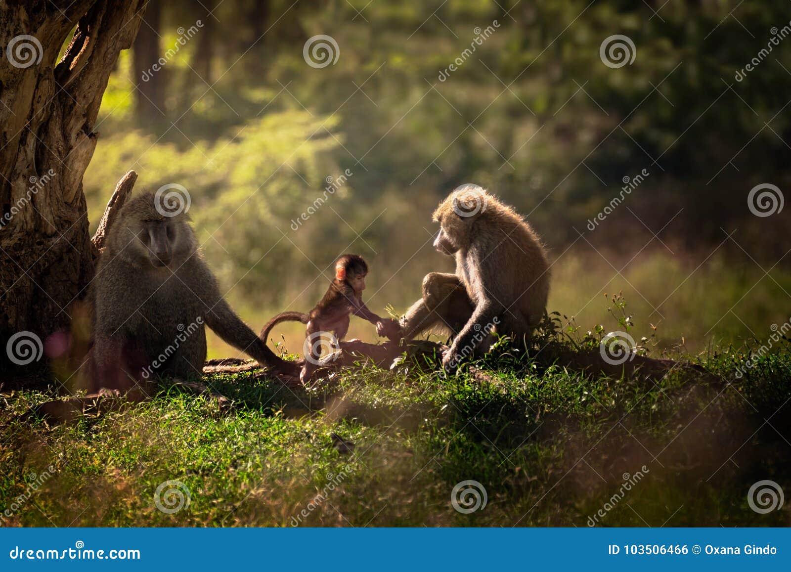 Familie van drie bavianen dichtbij de boom