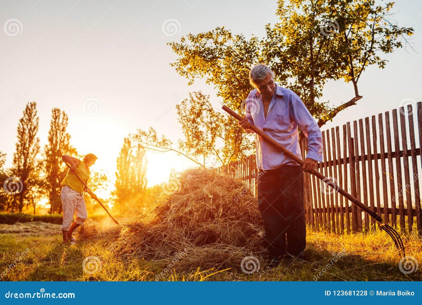 Familienpaare von Landwirten erfassen Heu mit Heugabel bei Sonnenuntergang in der Landschaft Fleißiger Leutechat