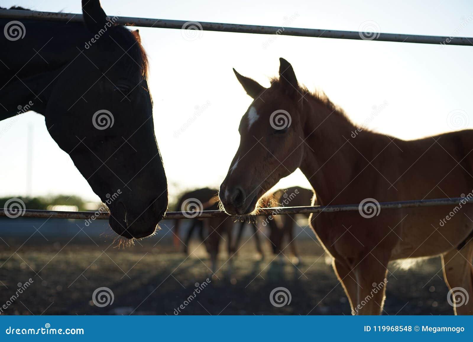 Familiepaard en veulen
