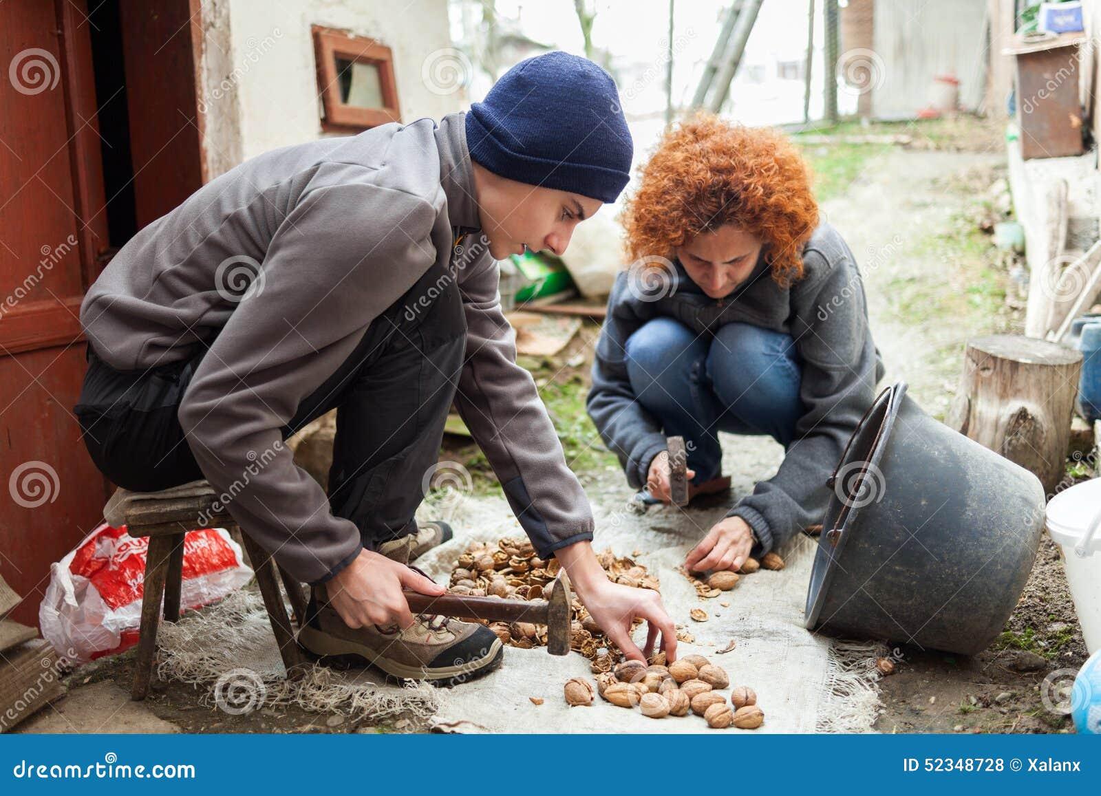 Familj av bönder som krossar valnötter