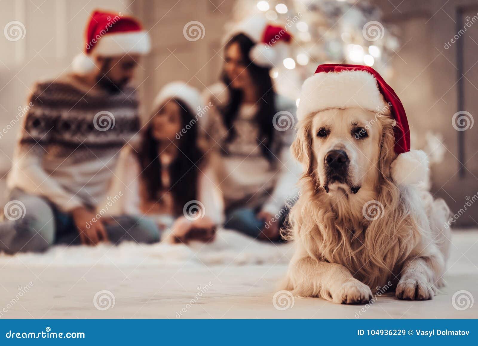 Familj med hunden på helgdagsafton för ` s för nytt år