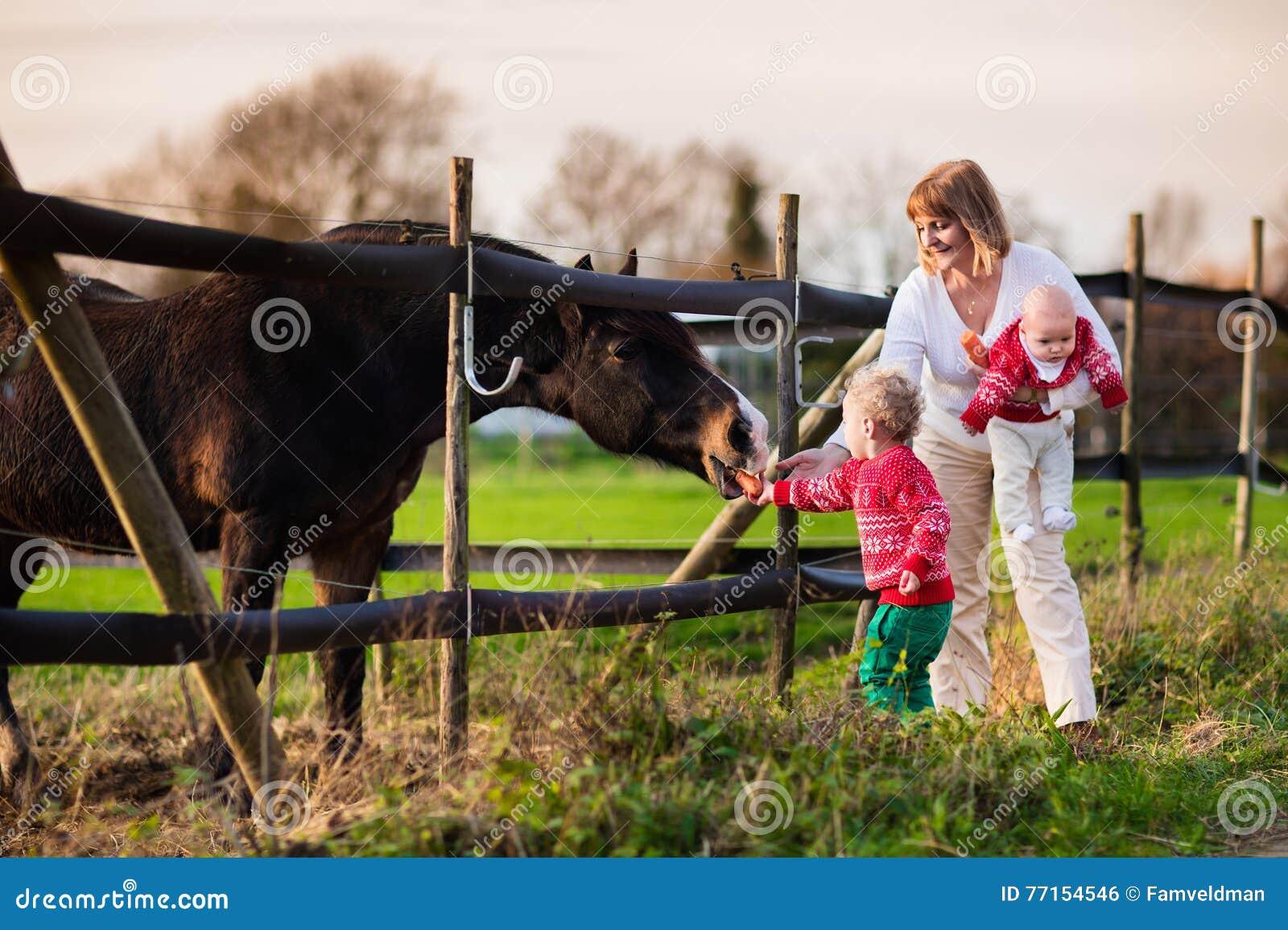 Famille avec des enfants alimentant le cheval