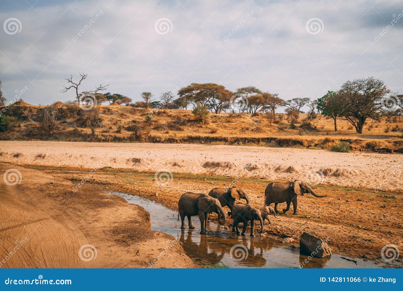 Famille d éléphant au trou d eau sur le safari