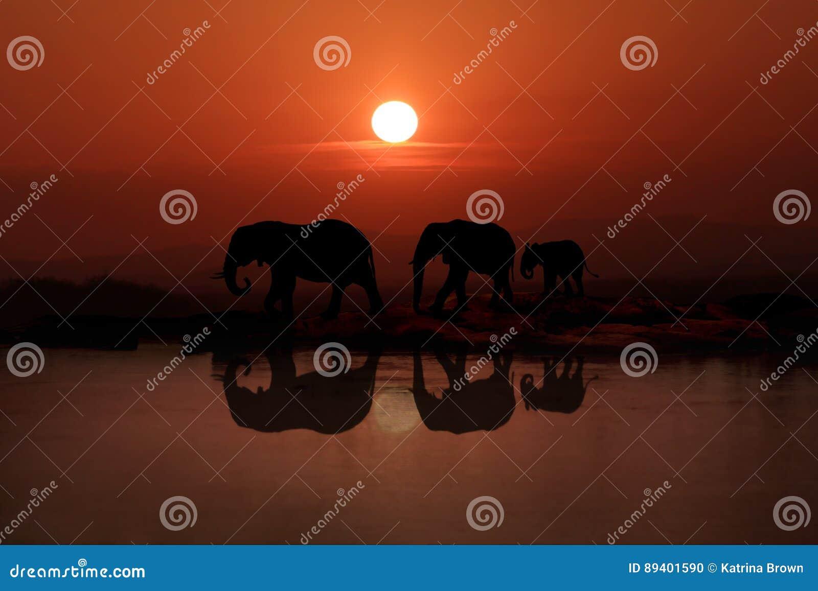 Famille de 3 éléphants marchant dans le coucher du soleil