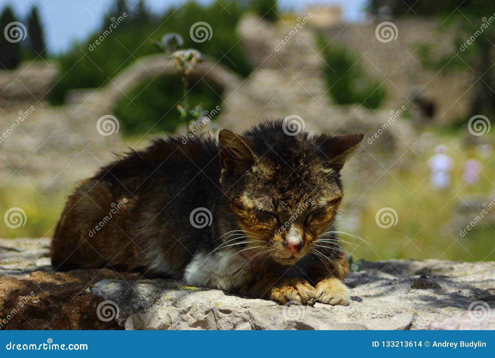 Famille de chat sauvage de pirate des vacances