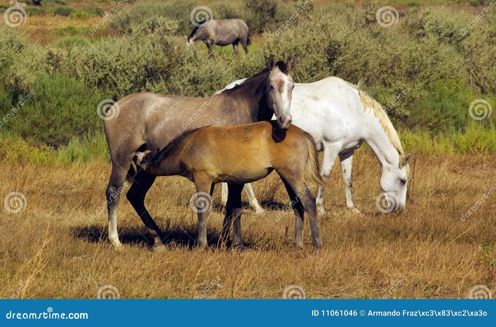 famille de cheval photo stock image du cheval animal 11061046. Black Bedroom Furniture Sets. Home Design Ideas