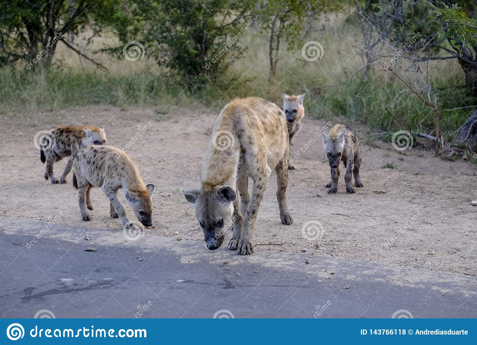 Famille des hyènes et des petits animaux