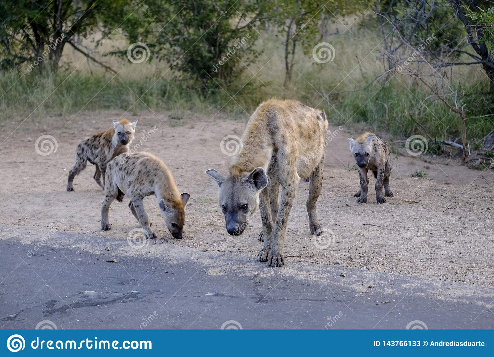 Famille des hy?nes et des petits animaux