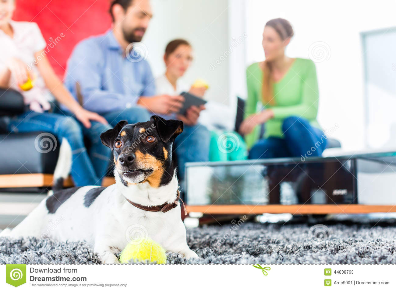 Family dog playing with ball in living room