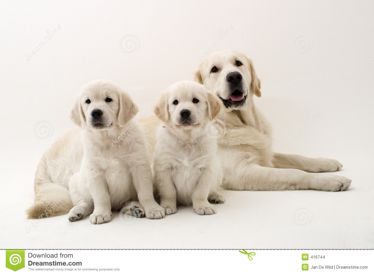 Family Dogs Stock Images - Image: 416744