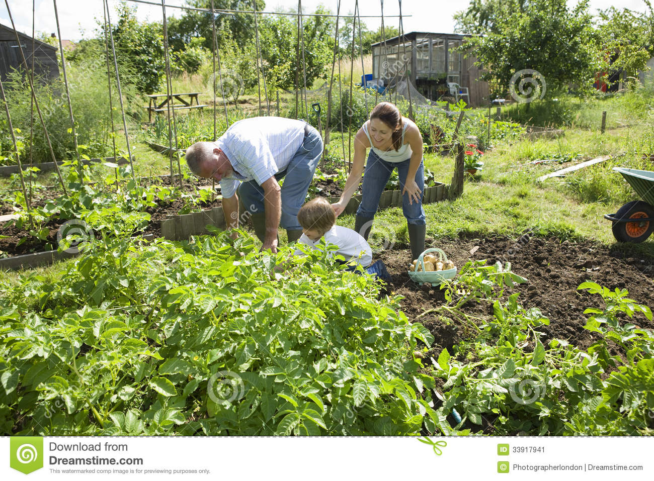 Family Gardening Together In Community Garden Stock Image - Image ...