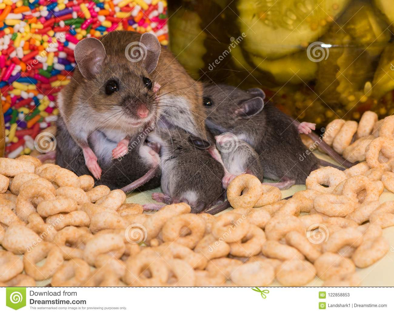 A Family Of House Mice In A Well Stocked Kitchen Cabinet ...