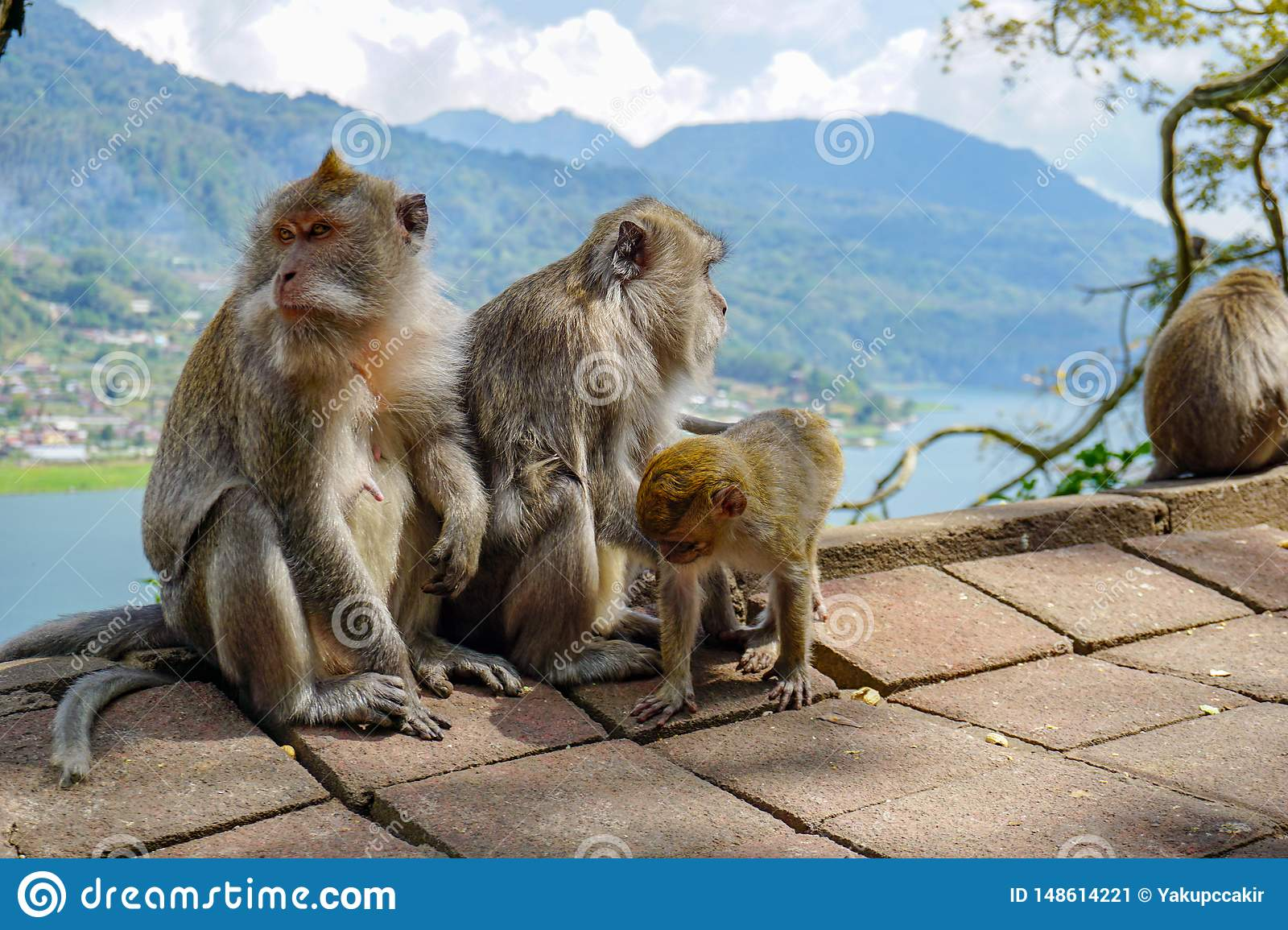 Family of monkeys with a little baby macaque near Tample in Monkey Forest, Ubud, Bali, Indonesia