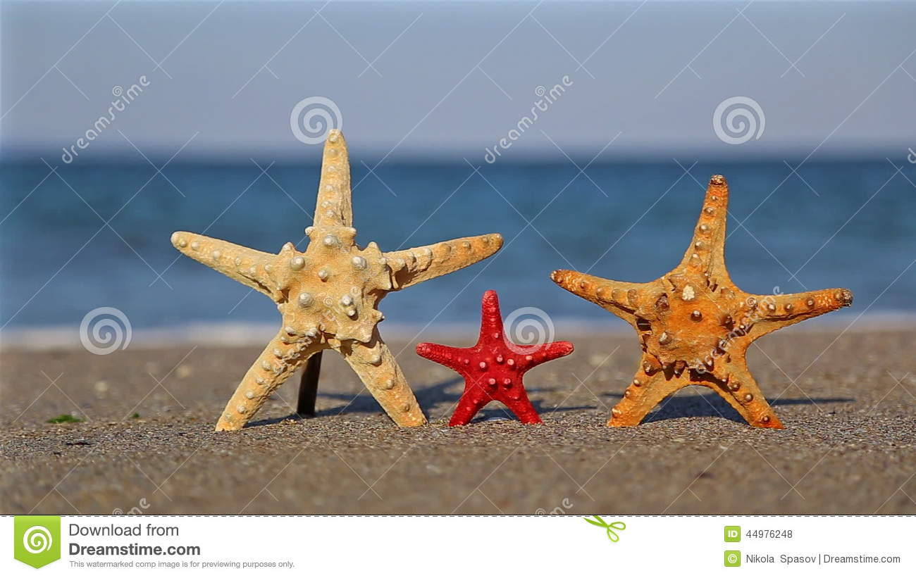 Are there any starfish in Bulgaria