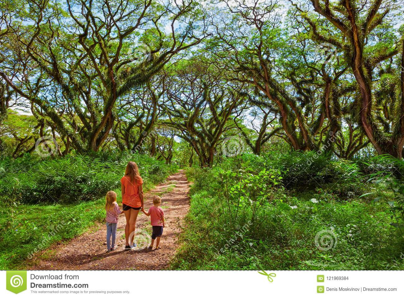 Family under green canopy in ancient forest