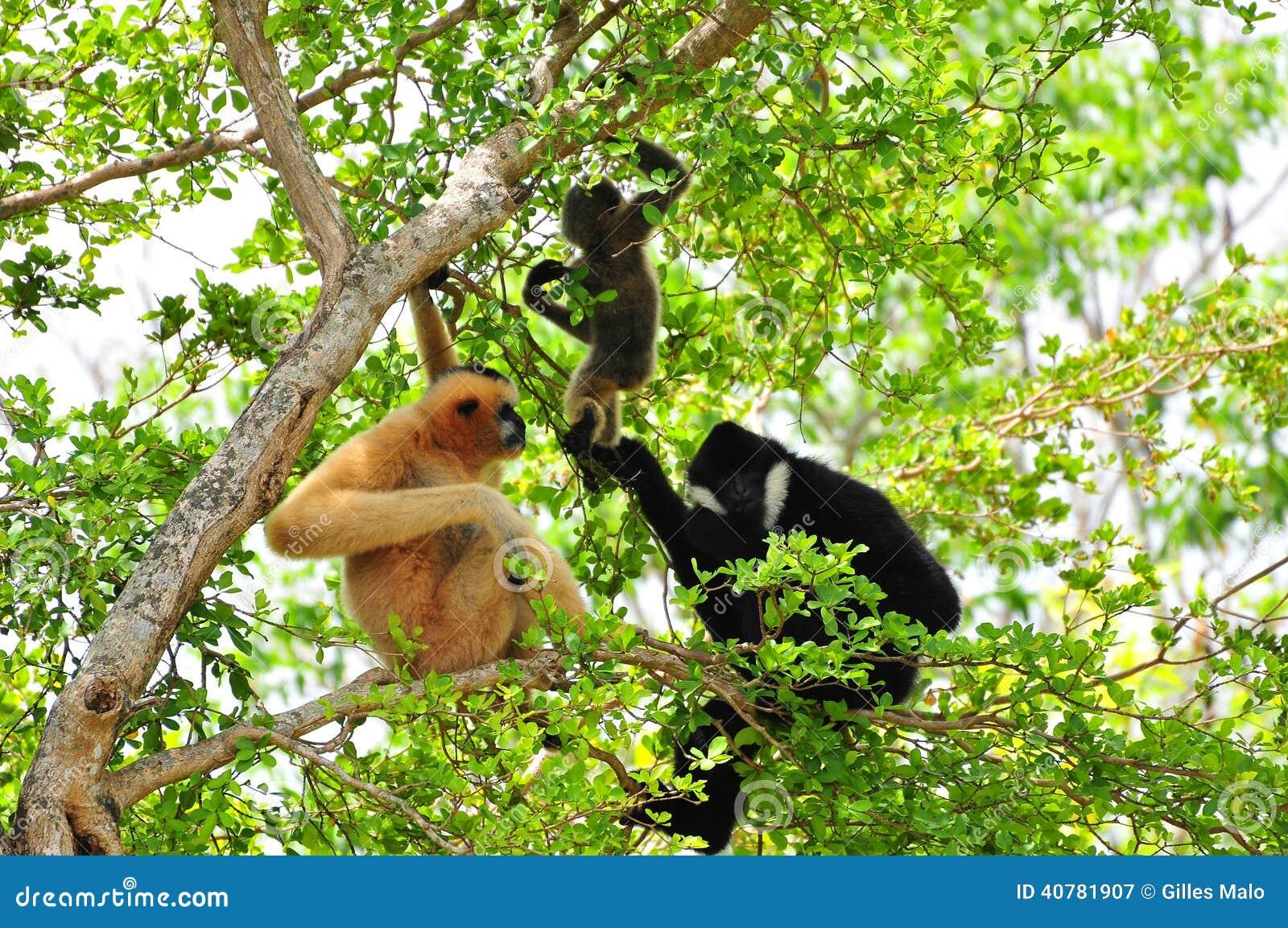 gibbon black single men Search for local single 50+ women  search single 50+ men | search single 50+ women gmakate gibbon, ne 63 years old view profile send message.