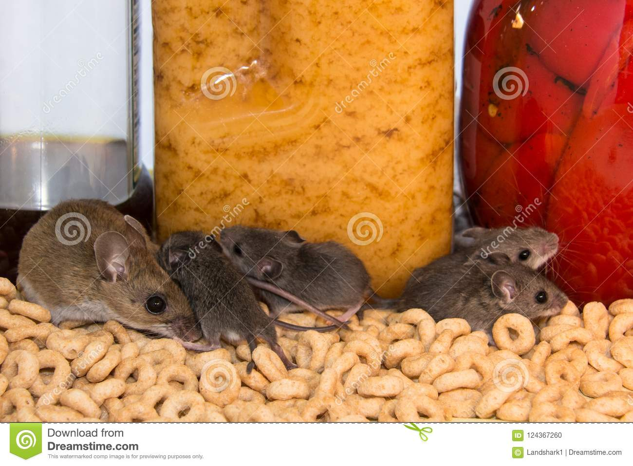 Marvelous A Family Of Wild House Mice Loose In A Kitchen Cabinet Home Interior And Landscaping Eliaenasavecom