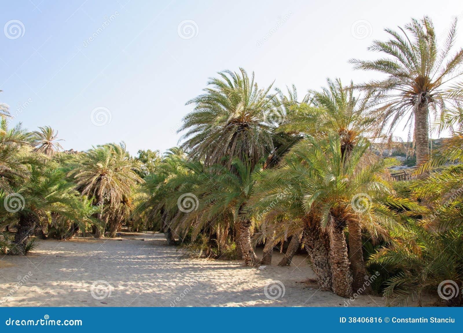 famous palm beach  vai island  crete greece royalty 1300 x 953 · jpeg