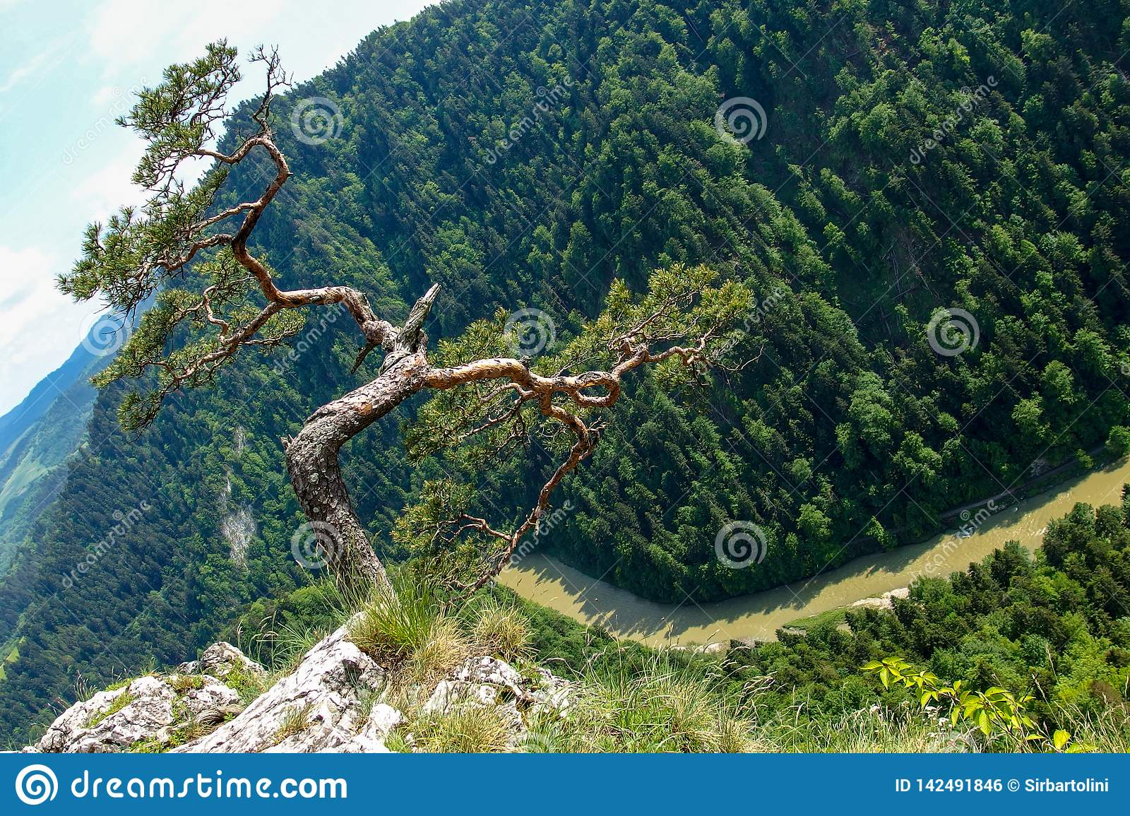 Famous pine on Sokolica peak and Dunajec river in southern Poland.