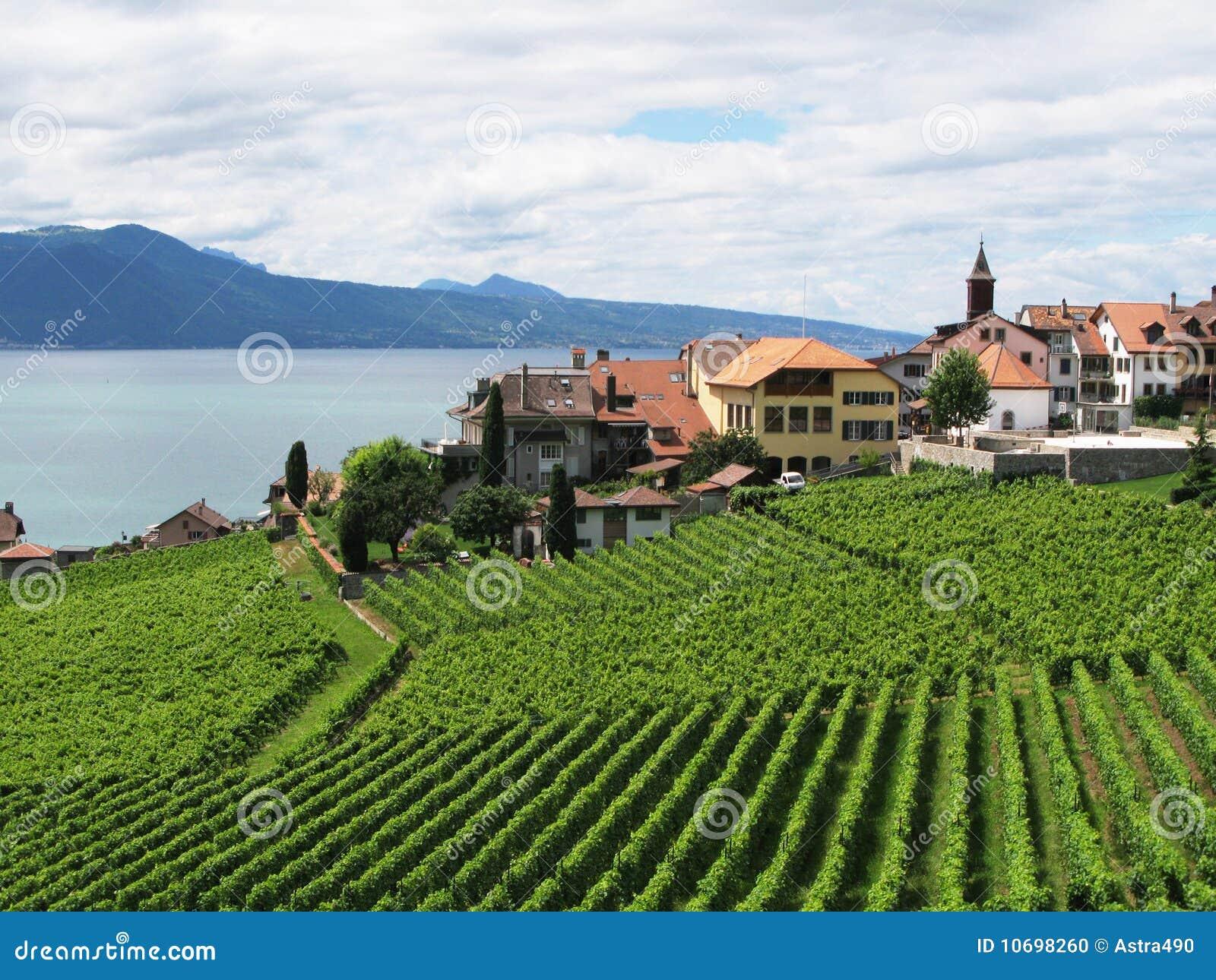 Famous vineyards in Lavaux region