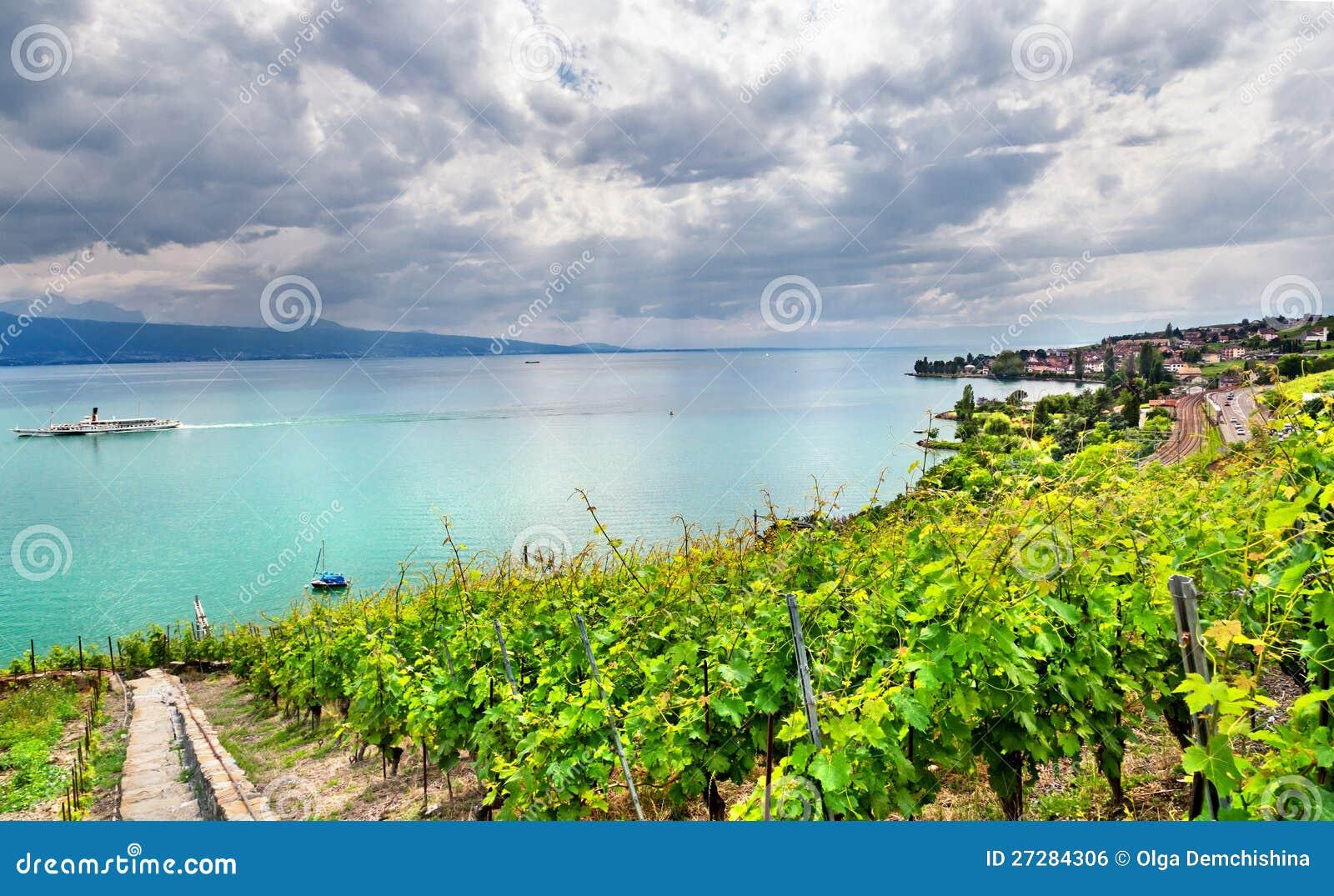 Famouse vingårdar i Geneva laken