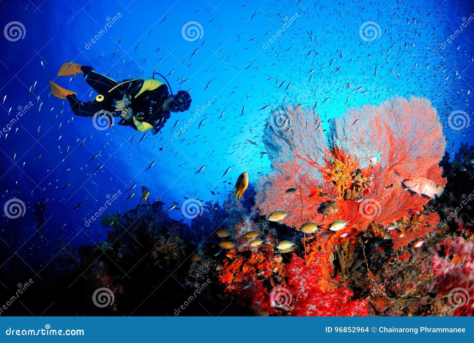 Fan de mer étonnante dans le monde sous-marin magnifique