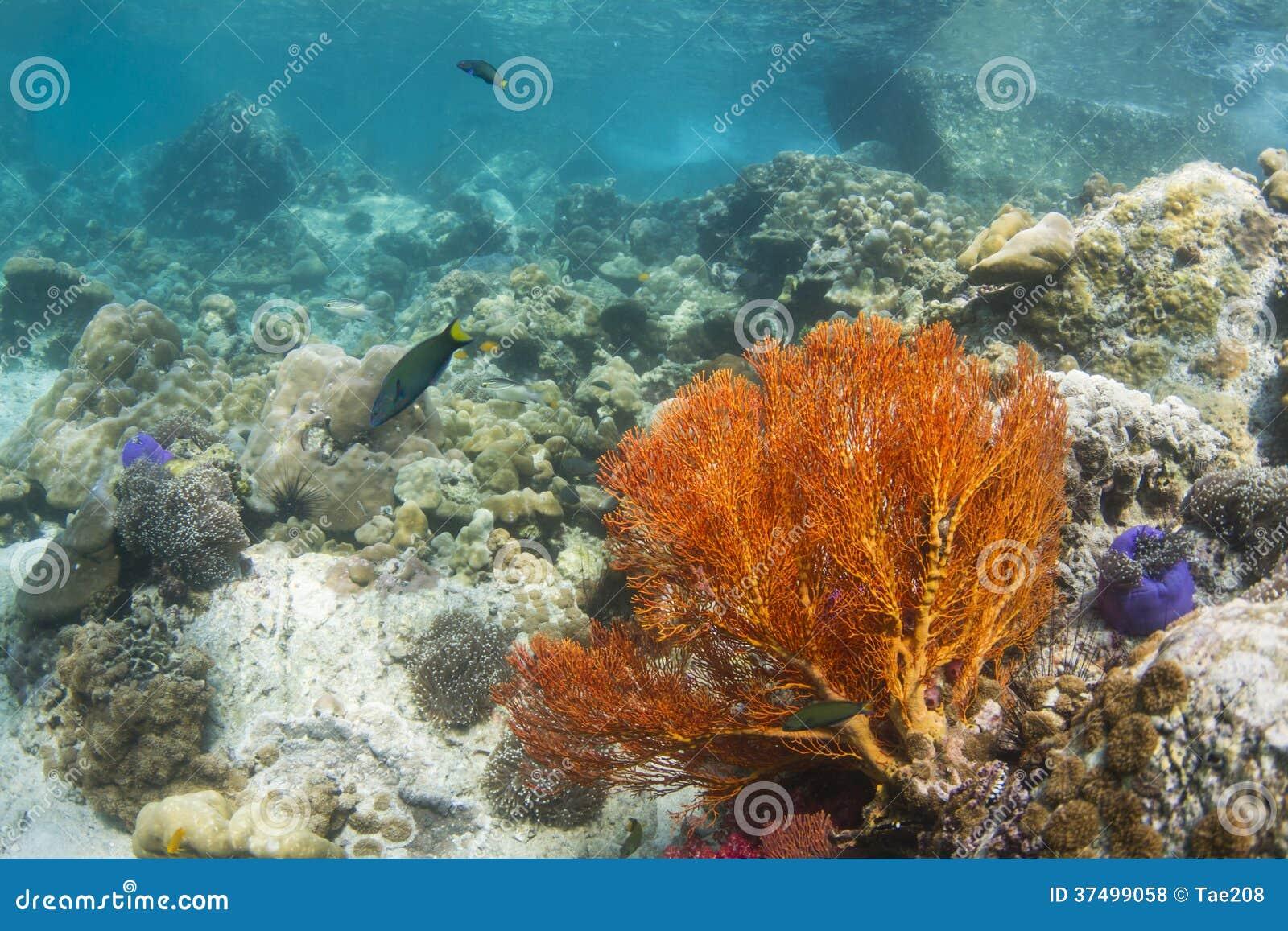 Fan nouée par jaune à l île de Lipe