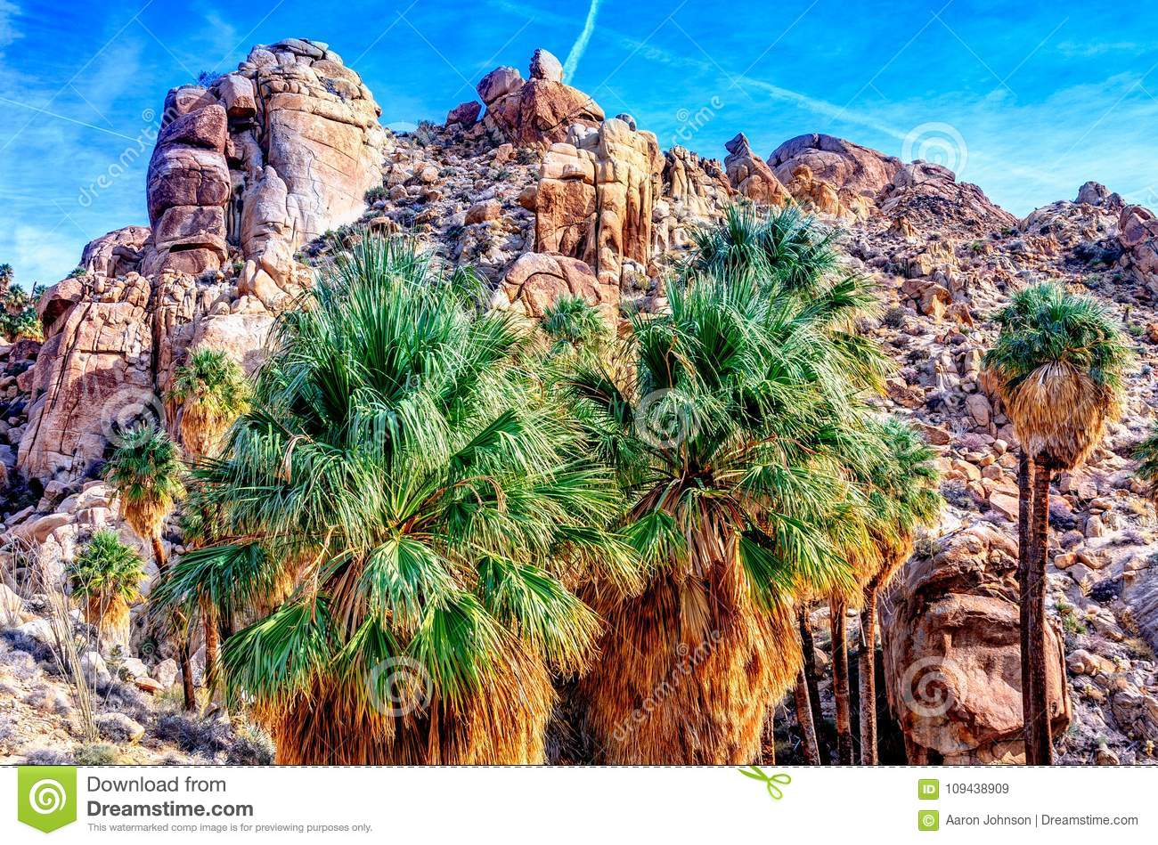 Colorful Fan Palm Trees In Joshua Tree Stock Image - Image of park ...