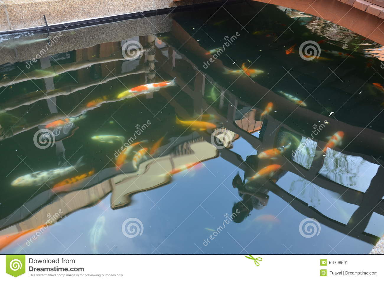 Fancy carp or koi fish in the garden stock photo image for Oily fish representative species