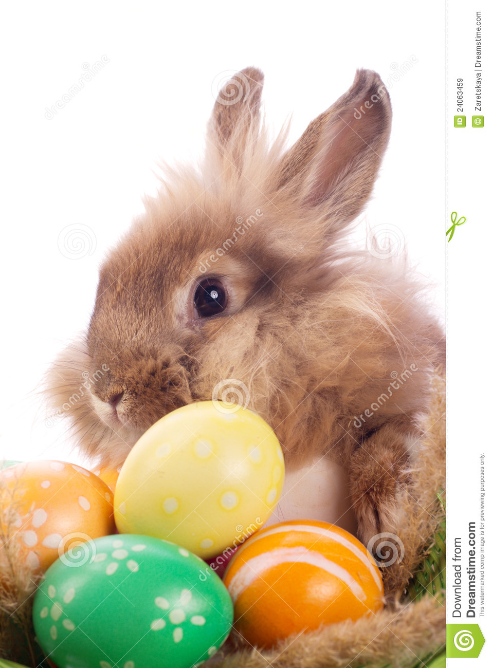 fancy rabbit and easter eggs royalty free stock images