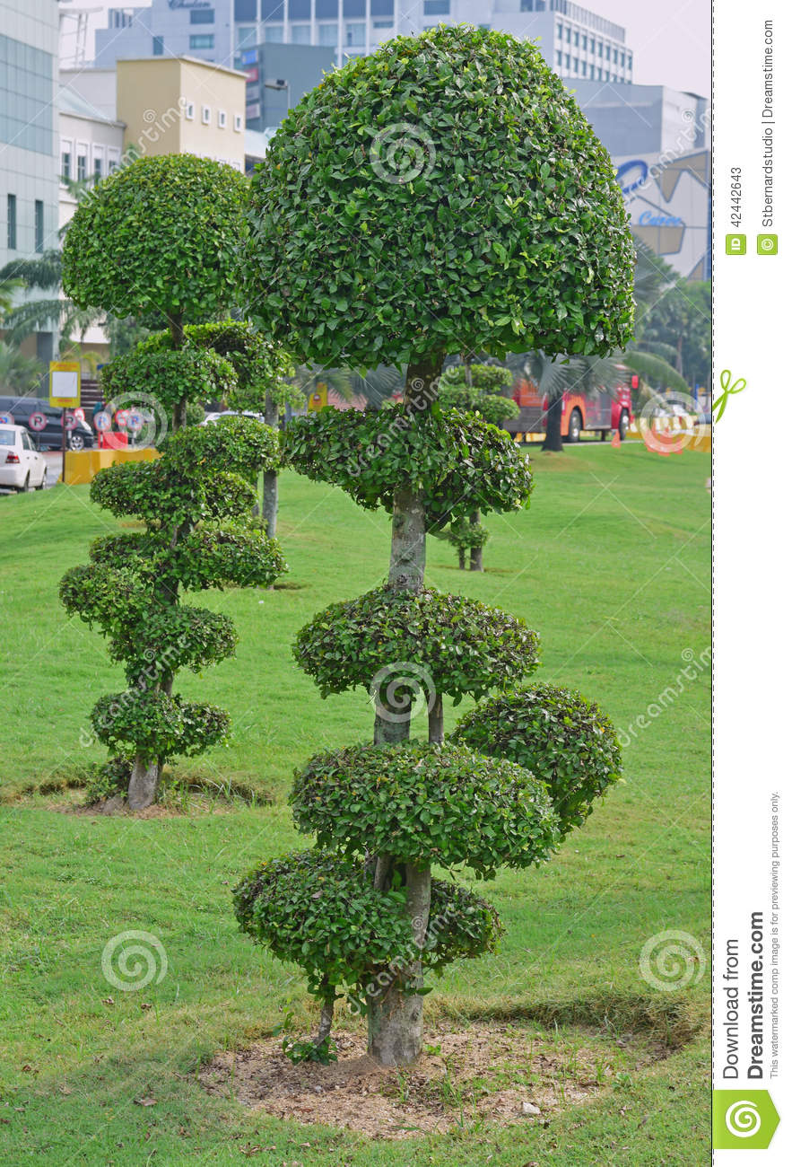 Fancy shaped decorative trees with button mushroom like canopy stock photo image 42442643 - Decorative small trees for landscaping ...