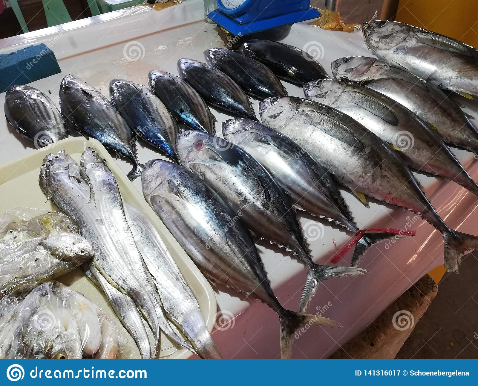 Fang des Tages auf Anzeige im lokalen Fischmarkt in Mamburao, Mindoro