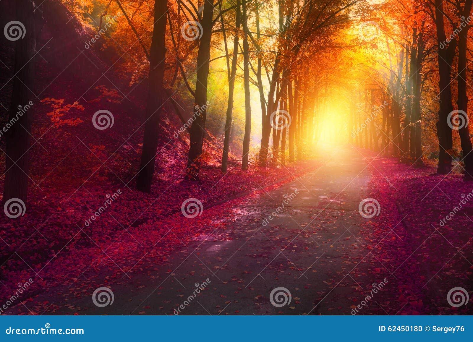 Fantasieszene im Herbstpark mit Sonne strahlt aus