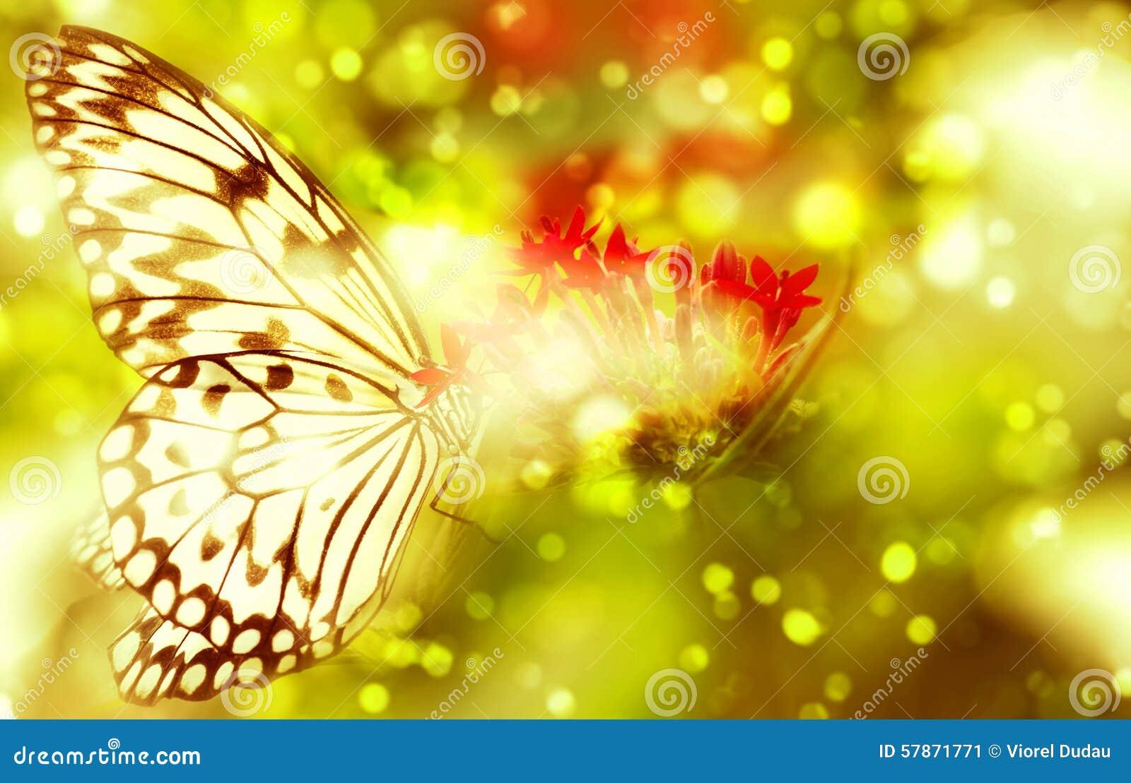 Fantasievlinder op bloem
