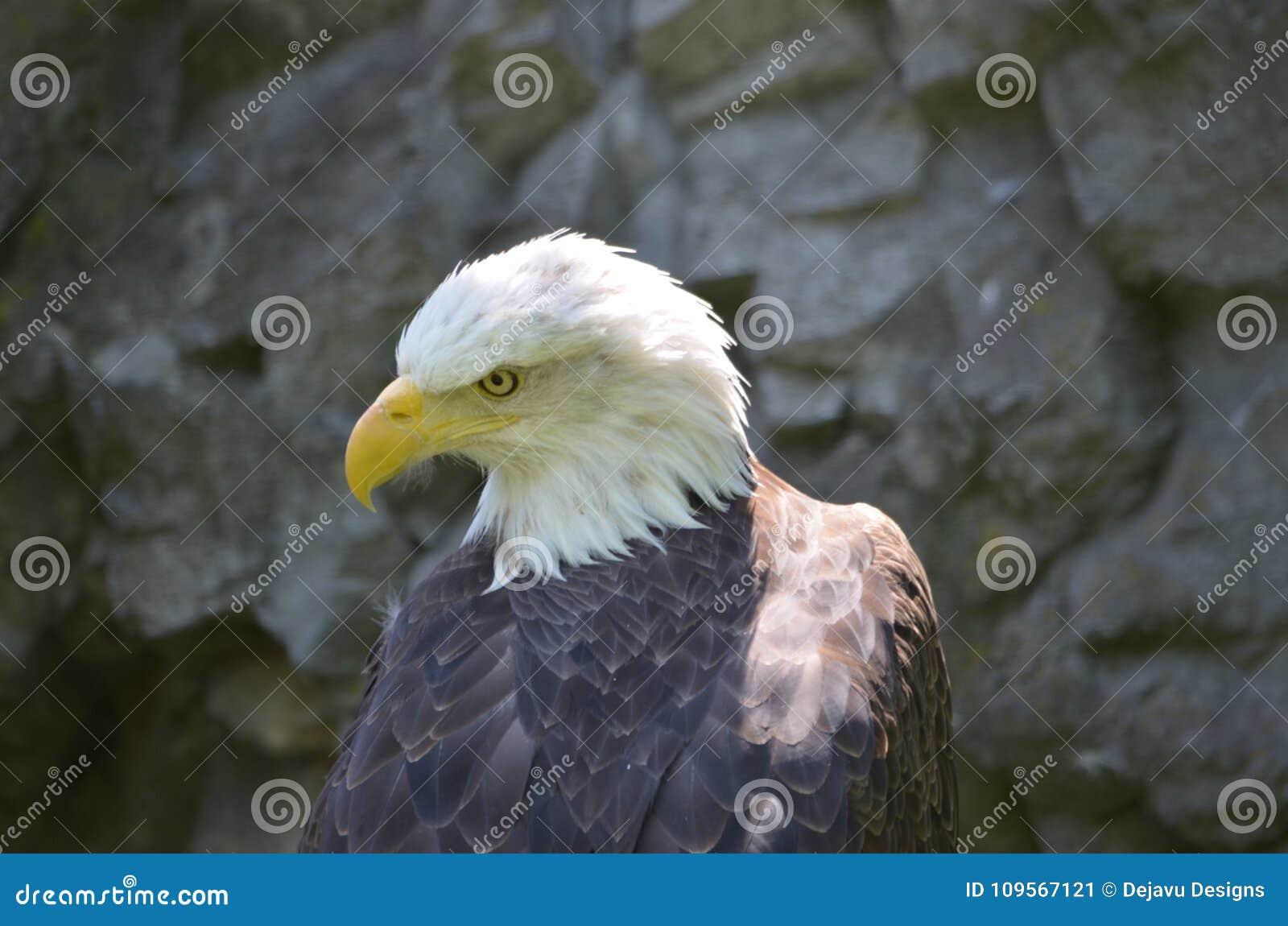 Eaglebucks
