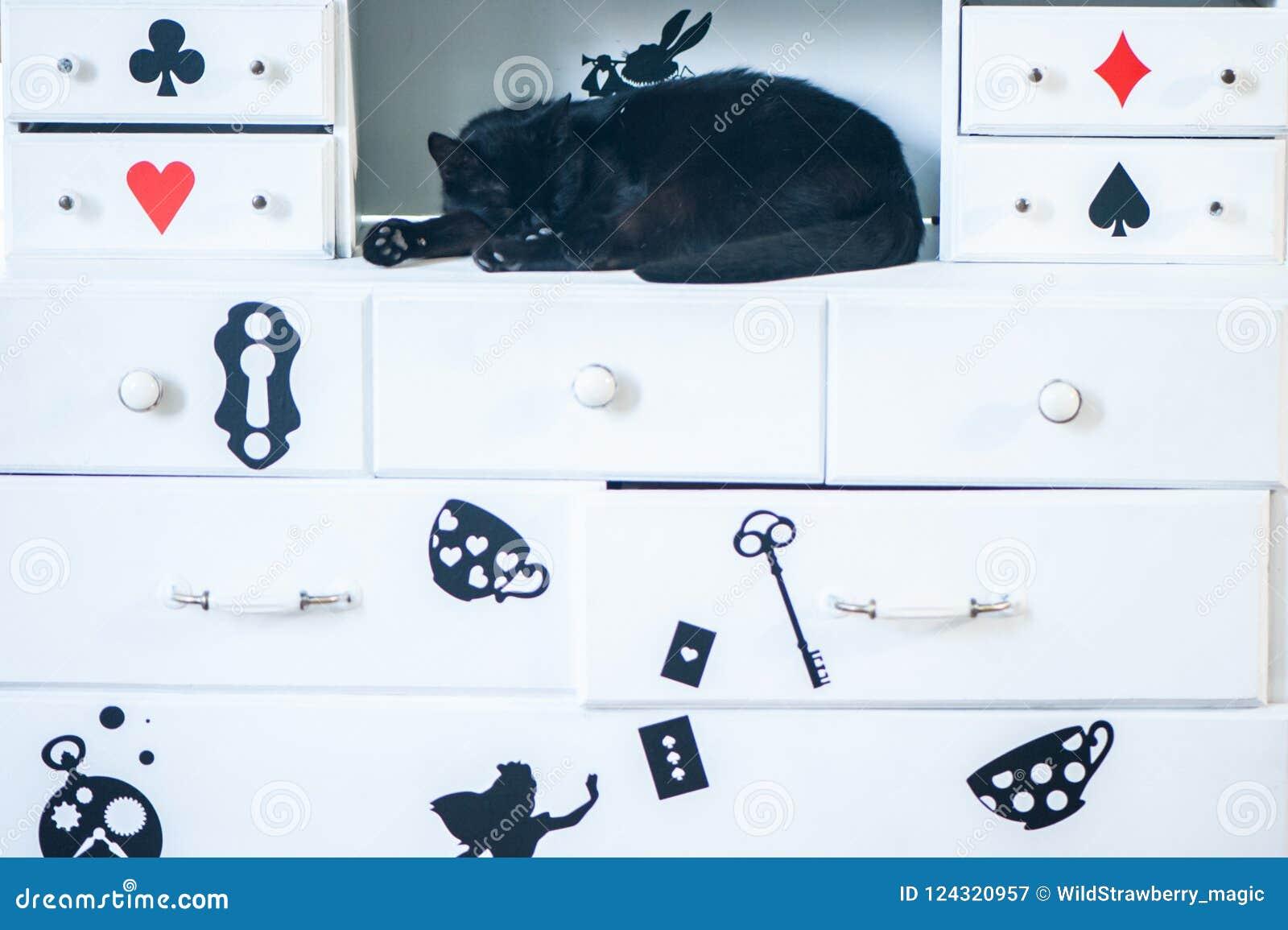Fantastic black cat sleep, theme of Alice in Wonderland