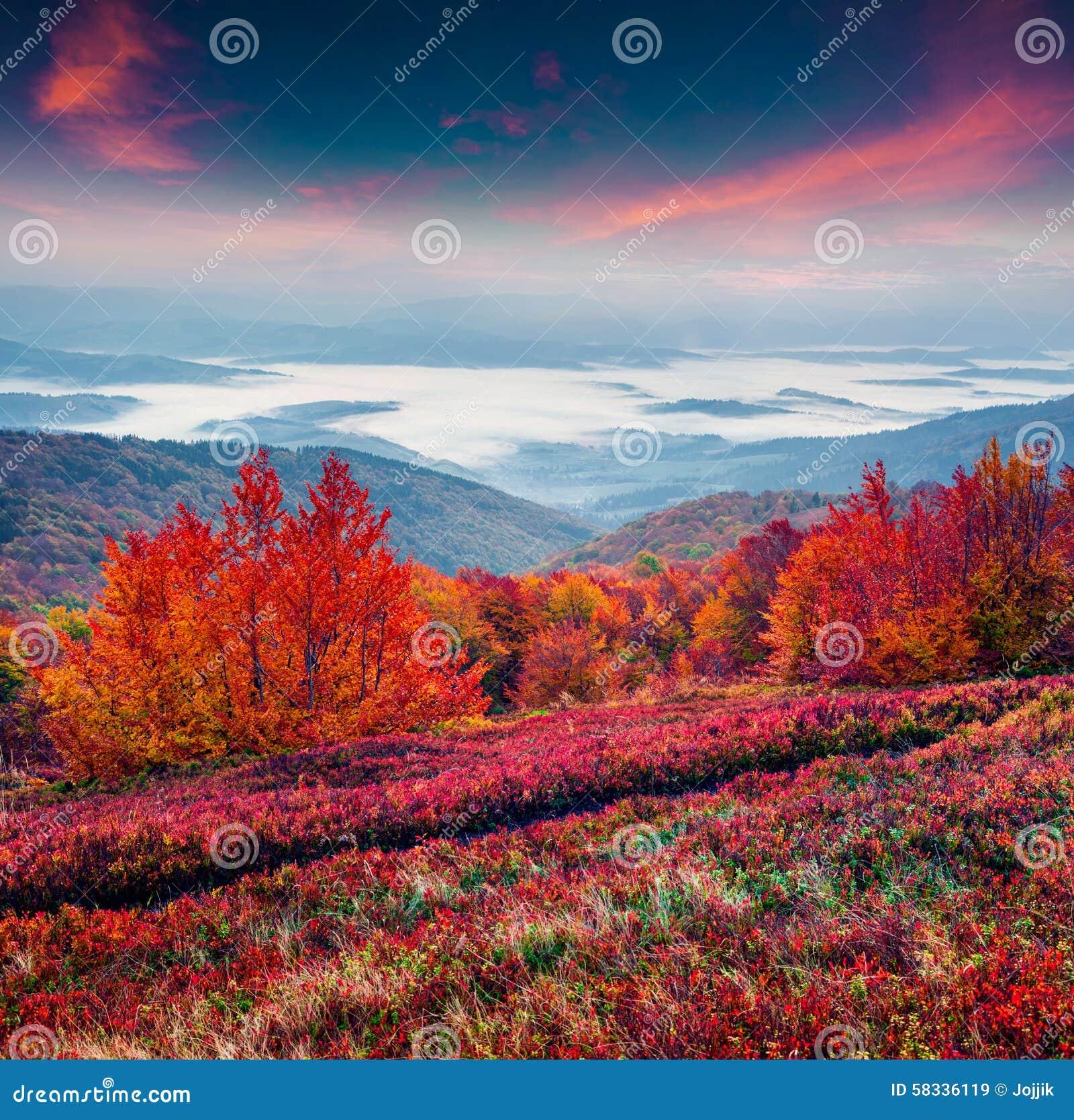 fantastic colors autumn landscape in the carpathian mountains royalty